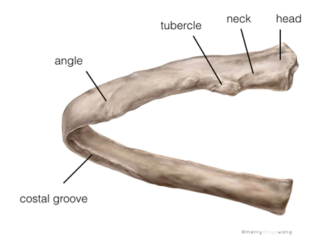 Intercostal Nerve Block